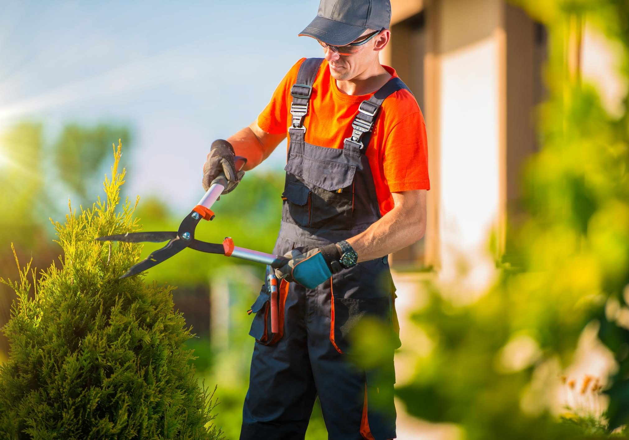 This is a picture of a tree and shrub care.